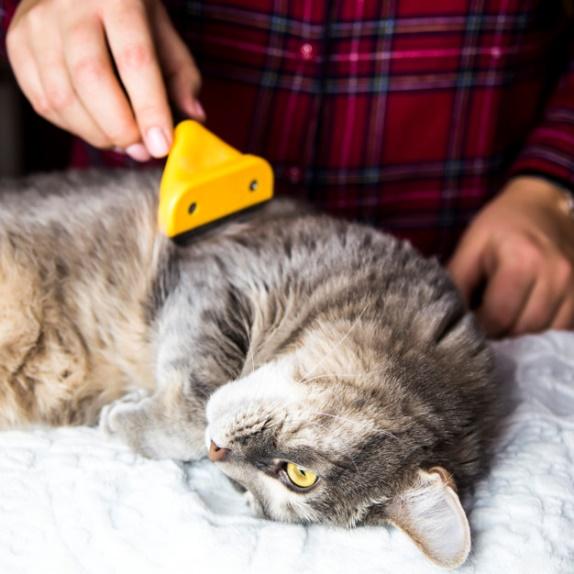 Pêlo dos Gatos